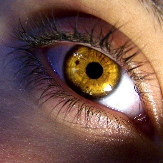 yeux jaunes